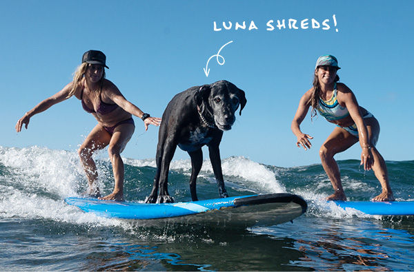 Luna Shreds
